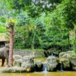 Elephants at the Singapore Zoo