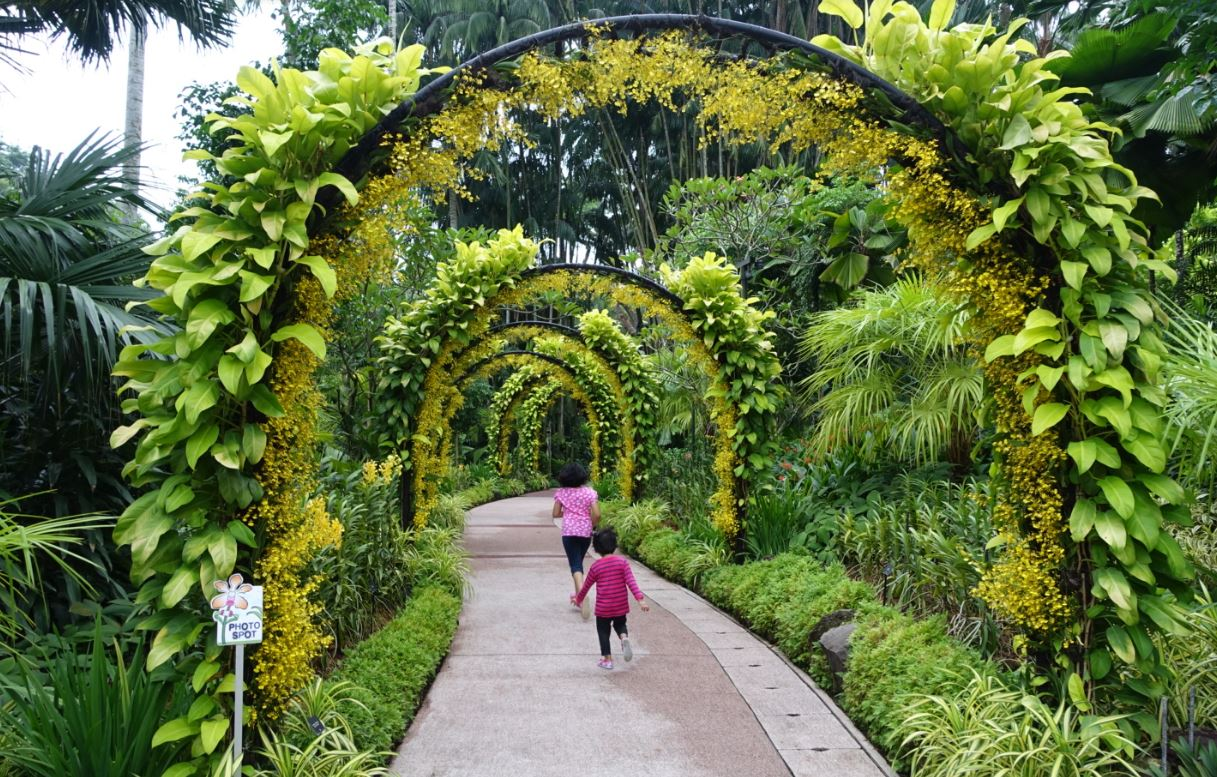 Singapore Botanic Gardens Singapore Travel